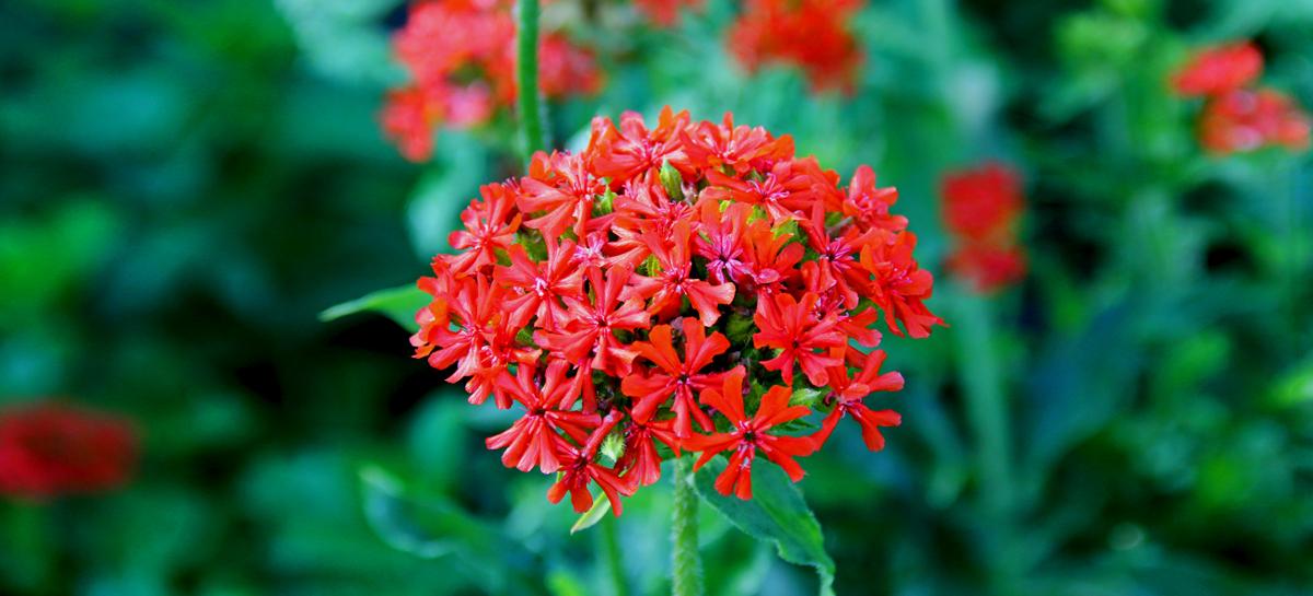 Декоративное растение спасет от болезней желудка
