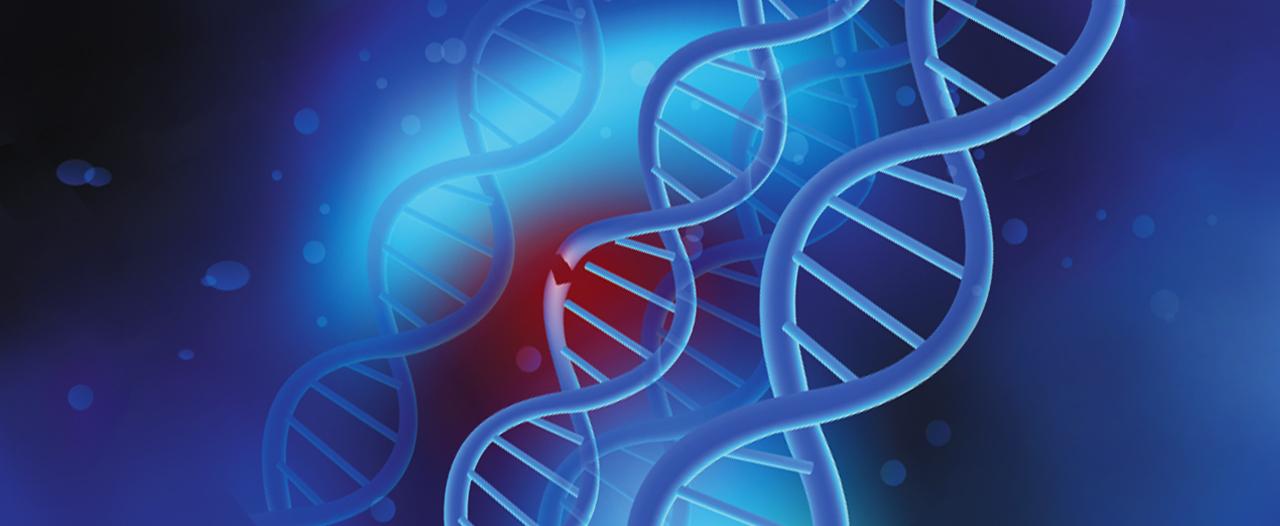 Один поломанный ген ослабляет все мышцы