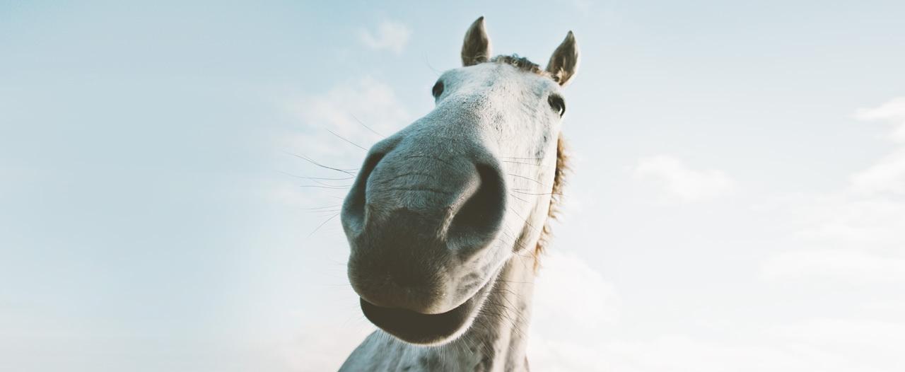 Конь-доктор поднимает настроение