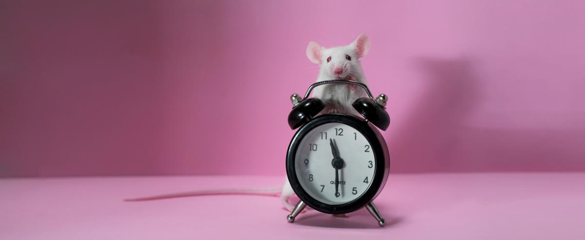 Российский препарат продлил жизнь больных раком мышей на рекордный срок