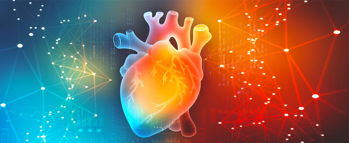 Сердце в 3D
