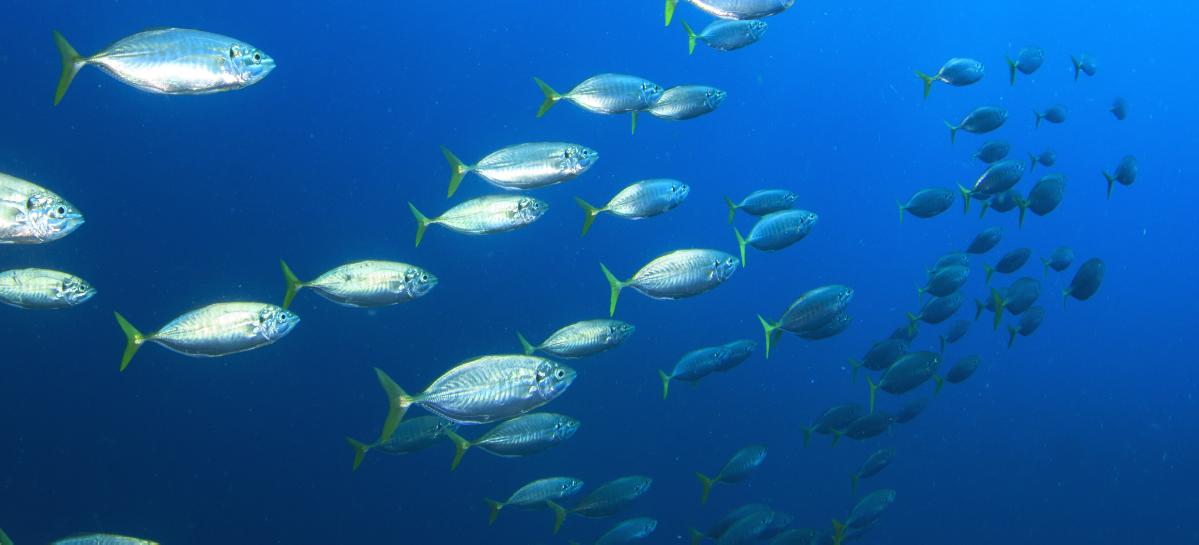 В ДВФУ создали уникальный антисептик на основе рыбьего жира
