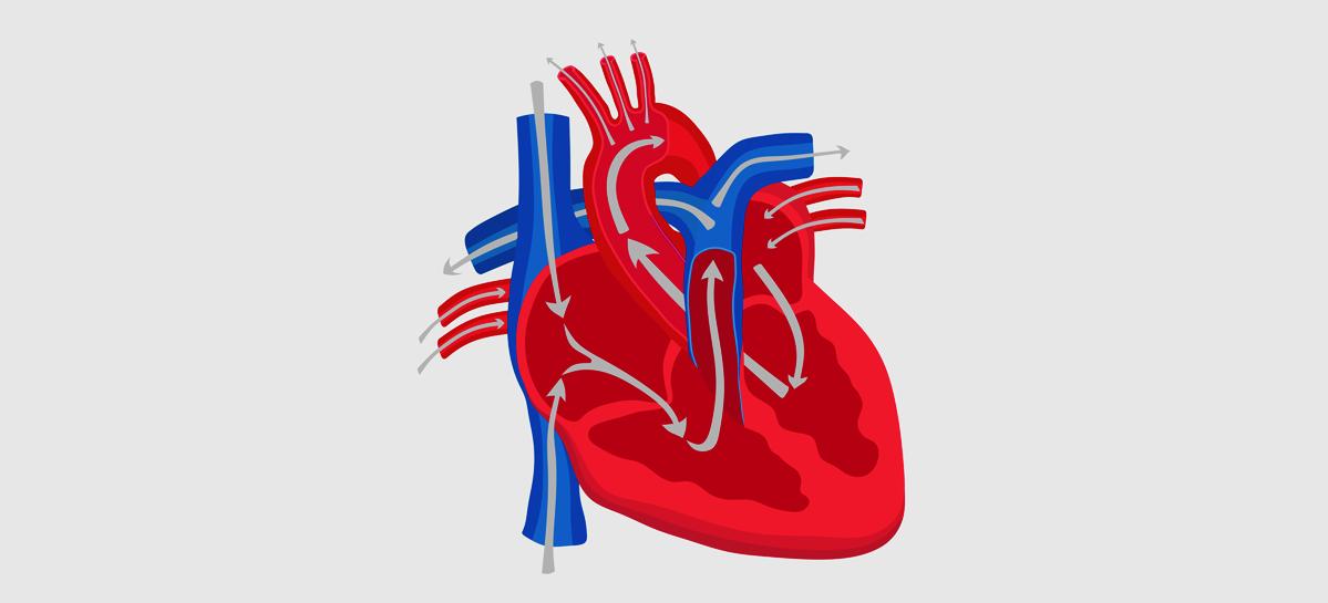 В новосибирском Центре им. Е.Н. Мешалкина разработали инновационный метод лечения сердечной недостаточности