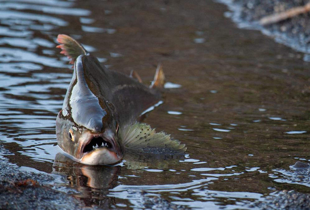 Осторожно! Рыба