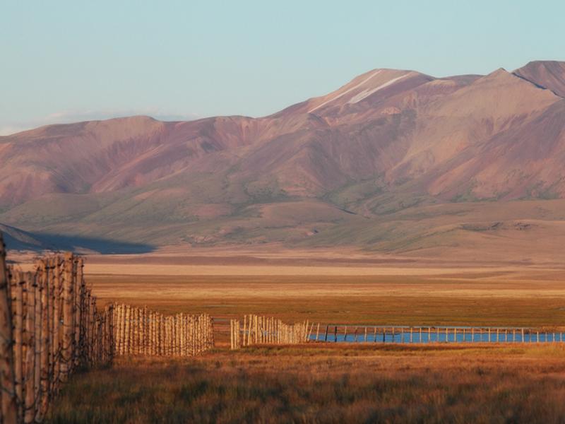 На территориях, граничащих с Монголией, проводятся мероприятия по профилактике чумы