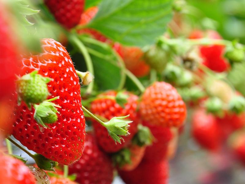 Пять ягодок для здоровья